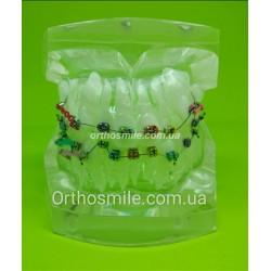 Типодонт (модель зубов) с брекетами